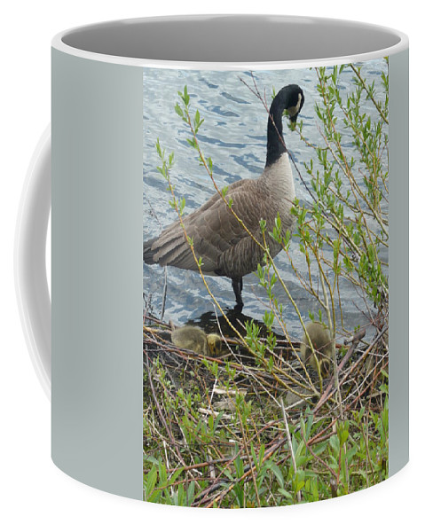 Goslings Coffee Mug featuring the photograph Mother And Child Canadian Geese by Nicki Bennett
