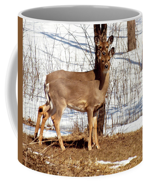 Deer Coffee Mug featuring the photograph Mother And Daughter by Thomas Young