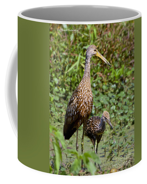 Limpkin Coffee Mug featuring the photograph Mother Limpkin And Colt by Barbara Bowen