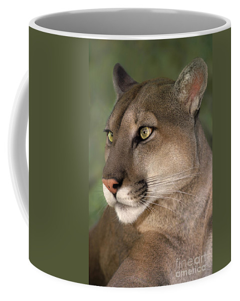 Mountain Lion Coffee Mug featuring the photograph Mountain Lion Portrait Wildlife Rescue by Dave Welling