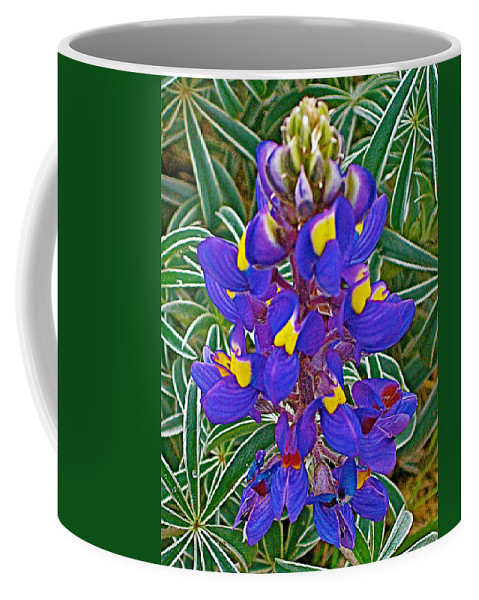 Mountain Lupine In Ancient Incan Pisac In Andes Mountains Above Sacred Valley Coffee Mug featuring the photograph Mountain Lupine In Ancient Incan Pisac In Andes Mountains Above Sacred Valley-peru  by Ruth Hager