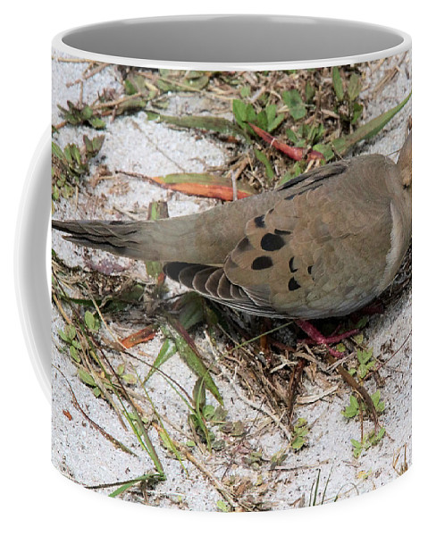 Mourning Dove Coffee Mug featuring the photograph Mourning Dove by Doris Potter