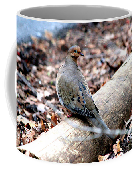Mourning Dove Coffee Mug featuring the photograph Mourning Dove by Kathy White