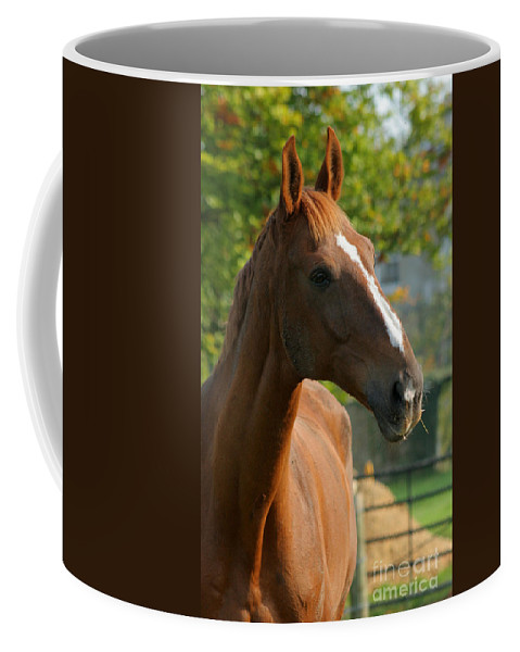 Horse Coffee Mug featuring the photograph Mr Handsome by Angel Tarantella