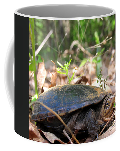 North American Turtles Mud Turtle Prints Stink Pot Images Chesapeake Bay Watershed Turtles Aquatic Reptiles Natural Landscapes Wetland Wildlife Endangered Ecosystems Swamp Creatures Of The Marsh Pond Life River Reptiles Small Black Water Turtle Rare Nature Prints Equestrian Animals Improve Wild Water Quality Wild Things Nature Conservancy River Keepers Coffee Mug featuring the photograph Mud Turtle by Joshua Bales