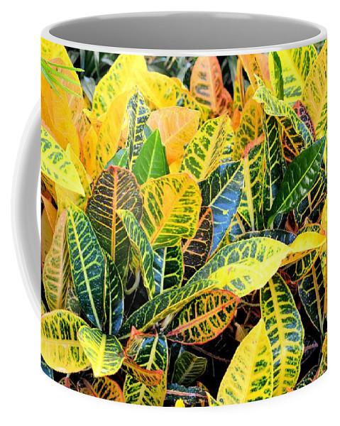 Multi-colored Coffee Mug featuring the photograph Multi-colored Croton by Maria Urso