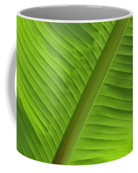 Banana Palms Coffee Mug featuring the photograph Music by Windy Osborn