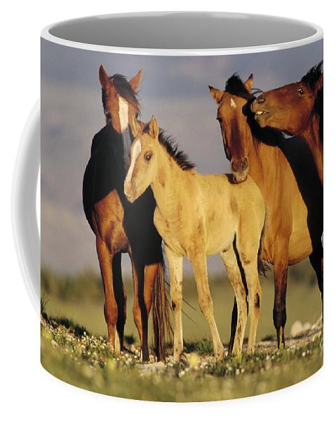 00340031 Coffee Mug featuring the photograph Mustang Family Band Montana by Yva Momatiuk John Eastcott