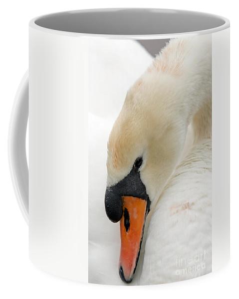 Cygnus Color Coffee Mug featuring the photograph Mute Swan Fine Art Photograph by John Harmon