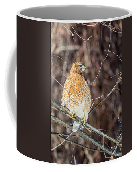 Red Shouldered Hawk Coffee Mug featuring the photograph My Good Side by Bill Wakeley