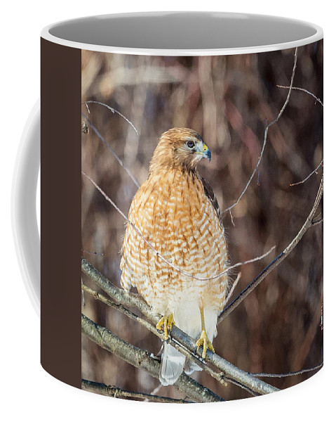 Red Shouldered Hawk Coffee Mug featuring the photograph My Good Side Square by Bill Wakeley
