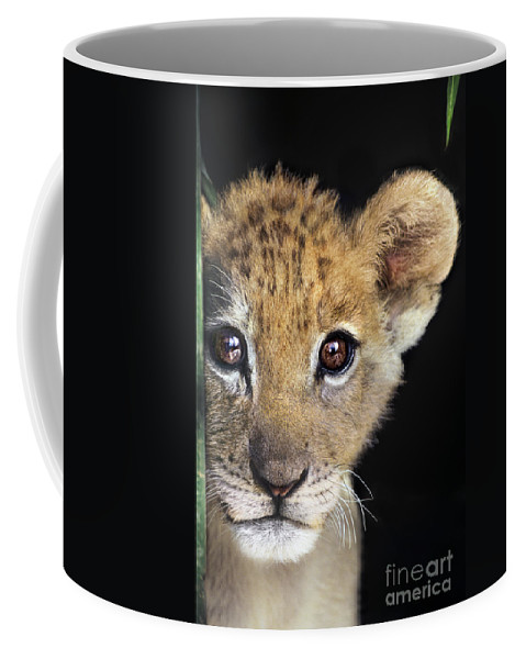 African Lion Coffee Mug featuring the photograph My Grandma What Big Eyes You Have African Lion Cub Wildlife Rescue by Dave Welling