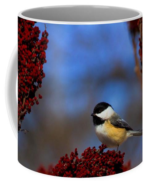 Bird Coffee Mug featuring the photograph My Little Chicadee by John Absher