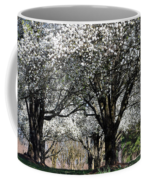 Spring Coffee Mug featuring the photograph My Neighborhood In Spring by Lydia Holly