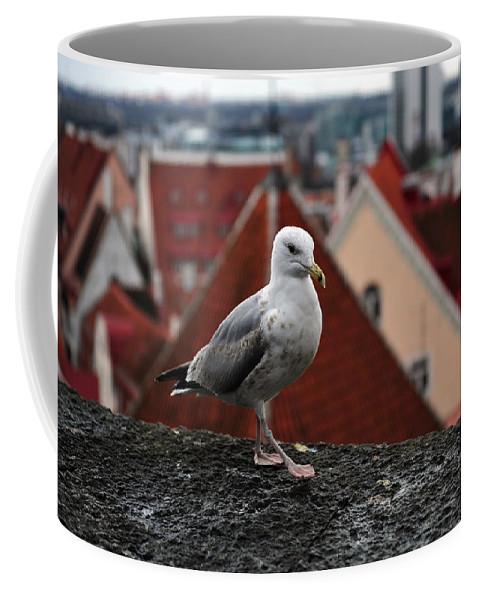 Seagull Coffee Mug featuring the photograph My Town My View by Randi Grace Nilsberg