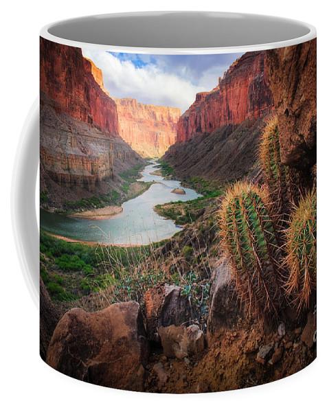 America Coffee Mug featuring the photograph Nankoweap Cactus by Inge Johnsson