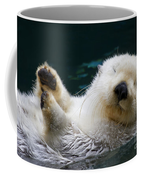 Otter Coffee Mug featuring the photograph Napping On The Water by Mike Dawson