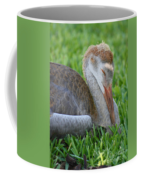 Sandhill Crane Chick Coffee Mug featuring the photograph Napping Sandhill Baby by Carol Groenen