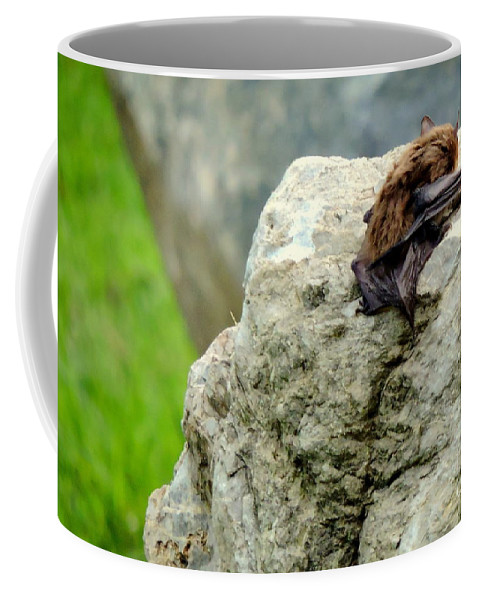 Bat Coffee Mug featuring the photograph Napping by Tami Quigley