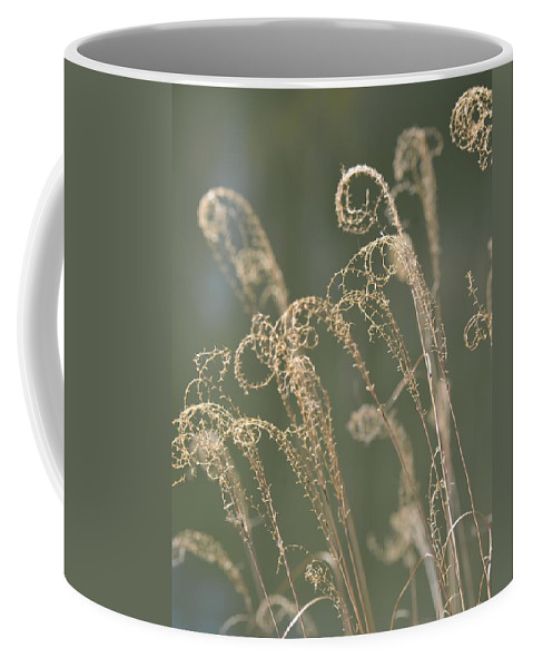 Nature Curls 2013 Coffee Mug featuring the photograph Nature Curls 2013 by Maria Urso
