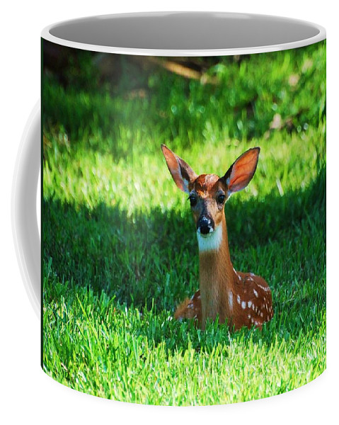 Fawn Deer Coffee Mug featuring the photograph Nature In The Back Yard by Davids Digits