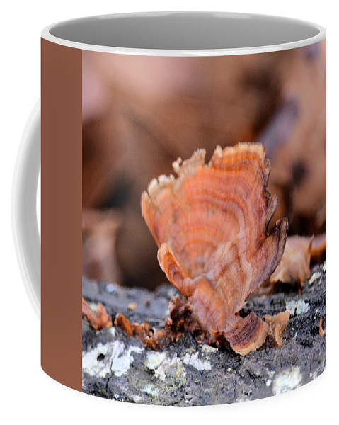 Nature's Abstract 4 Coffee Mug featuring the photograph Nature's Abstract 4 by Maria Urso