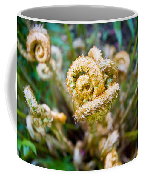 Fern Coffee Mug featuring the photograph Natures Knot-how To Twist by Eti Reid