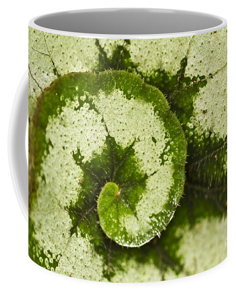 Flora Coffee Mug featuring the photograph Natures Spiral by Heiko Koehrer-Wagner