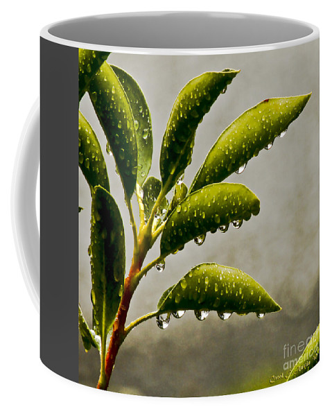 Nature Coffee Mug featuring the photograph Natures Teardrops by Carol F Austin