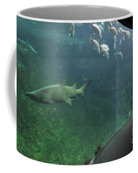 Child Coffee Mug featuring the photograph Nausicaa by Arterra Picture Library