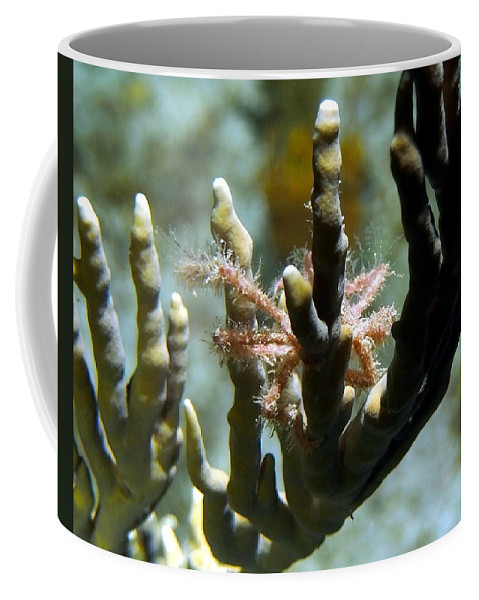 Nature Coffee Mug featuring the photograph Neck Crab - Macro Undersea Reef Life by Amy McDaniel