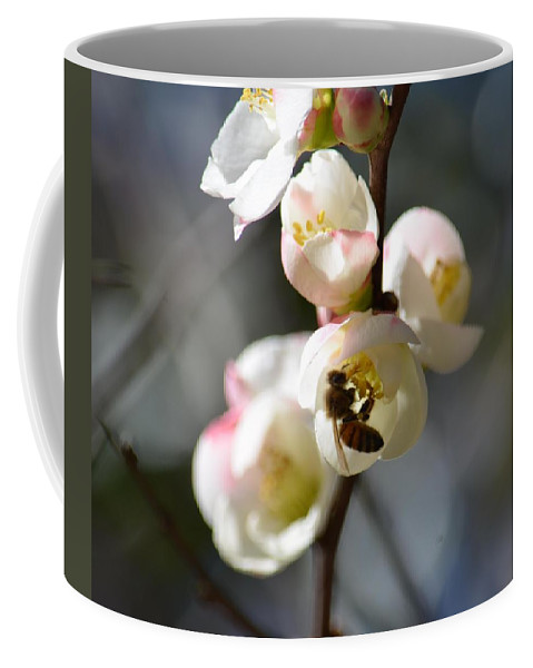 Nectar Hunting In Spring 2013 Coffee Mug featuring the photograph Nectar Hunting In Spring 2013 by Maria Urso