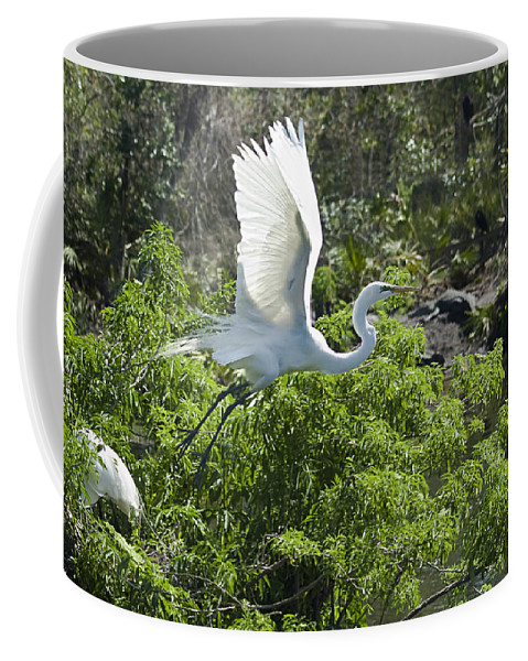 Great White Egrets Coffee Mug featuring the photograph Need More Branches by Carolyn Marshall