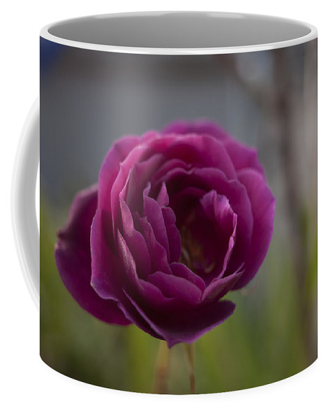 Flower Coffee Mug featuring the photograph Neighbors Garden by Miguel Winterpacht
