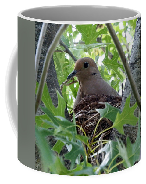 Bird Coffee Mug featuring the photograph Nesting Dove by David G Paul