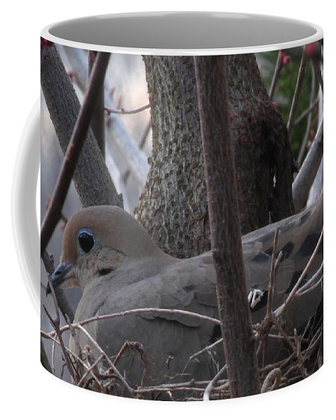 Morning Dove Nest Images North American Birds Peaceful Creatures Cute Animals Wildlife Habitat Song Birds Gray Birds Blue Eyed Birds Mother Bird Female Mourning Dove Stat Bird Species Dove Prints Song Dove Graceful Birds Angelic Animals Harmless Woodland Forest Beings Wild Things Coffee Mug featuring the photograph Nesting Morning Dove by Joshua Bales