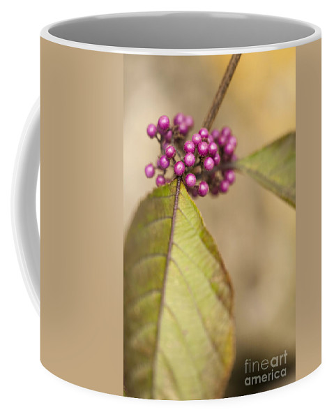 Garden Coffee Mug featuring the photograph New Berries by Anne Gilbert