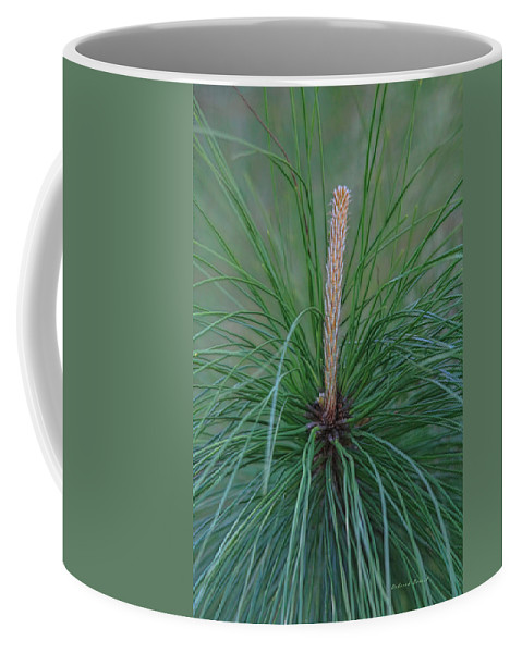 Pine Tree Coffee Mug featuring the photograph New Growth In Life by Deborah Benoit