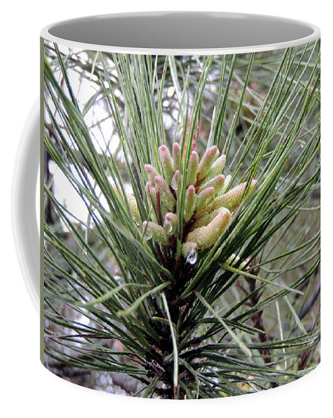 Digital Photography Coffee Mug featuring the photograph New Life by Kim Pate