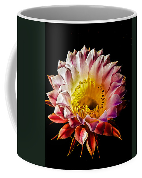 Cactus Coffee Mug featuring the photograph Night Bloomer by Robert Bales