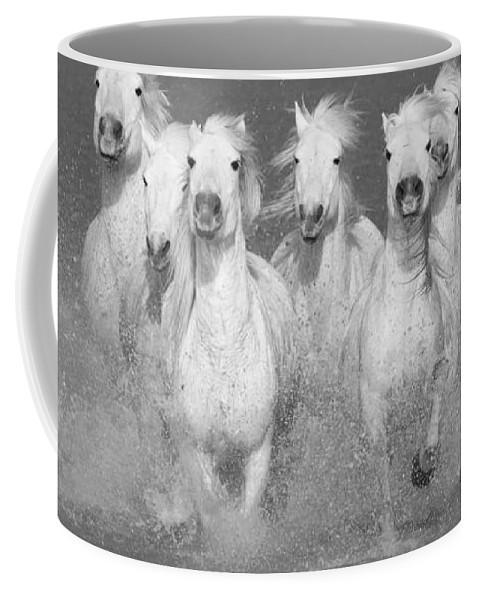 Horse Coffee Mug featuring the photograph Nine White Horses Run by Carol Walker