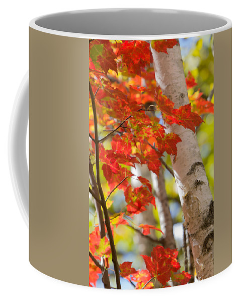 Orange Coffee Mug featuring the photograph Bright Orange Birch by Patti Deters