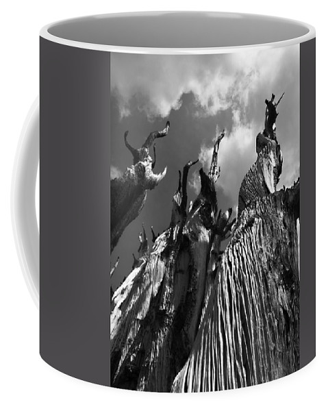 Pine Coffee Mug featuring the photograph No One Here Will Get Out Alive by Joe Schofield