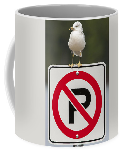 Bird Coffee Mug featuring the photograph No Parking by Richard Kitchen