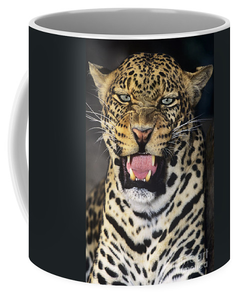 African Leopard Coffee Mug featuring the photograph No Solicitors African Leopard Endangered Species Wildlife Rescue by Dave Welling