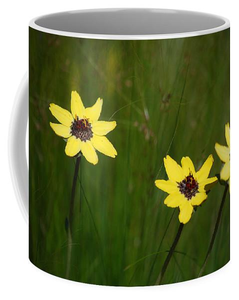 Flower Coffee Mug featuring the photograph #nokxl by Becky Furgason