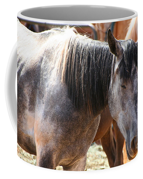Horse Coffee Mug featuring the photograph Noon Nap by Susan Herber