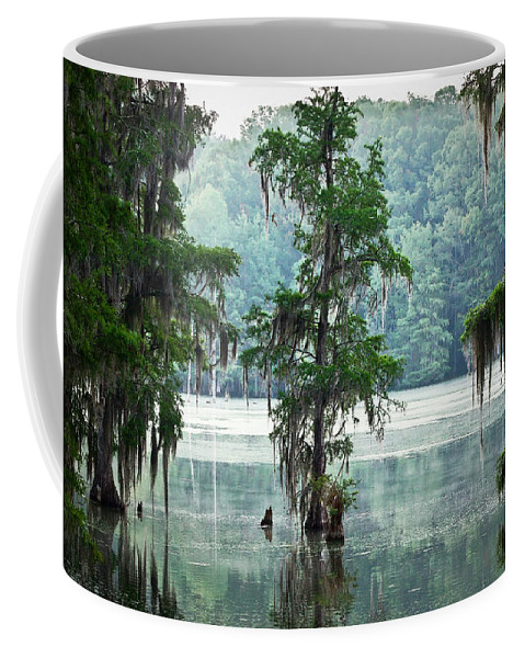 Swamp Coffee Mug featuring the photograph North Florida Cypress Swamp by Rich Leighton