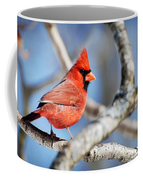 Cardinal Coffee Mug featuring the photograph Northern Cardinal Scarlet Blaze by Christina Rollo
