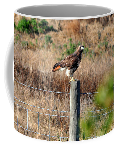 Hawk Coffee Mug featuring the photograph Northern Harrier by Davids Digits